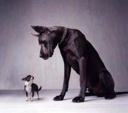comparisons_dogs-540x479
