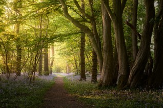 Woodland Path-S